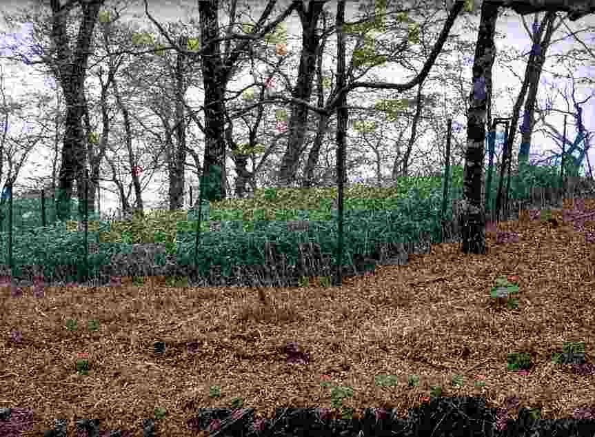 写真:フェンスで囲った場所だけが青々と草が生えている