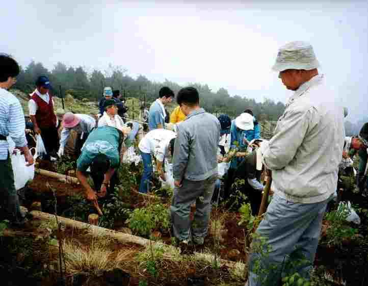 写真:大勢で苗木を植えている様子