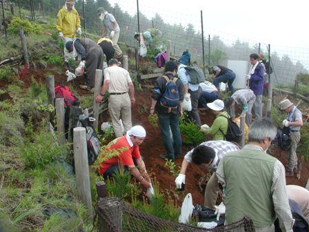 写真:花立で植樹しているボランティアの皆さん