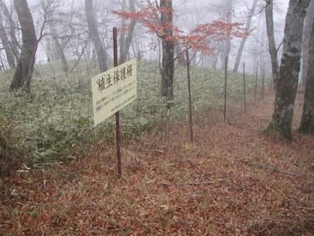 写真:設置された植生保護柵
