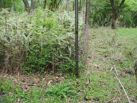 写真:植生保護柵の内側で回復してきた植生
