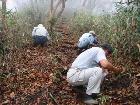 写真:種子を拾う森林インストラクター