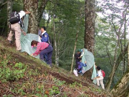 写真:樹幹を保護するネットを設置するボランティアの皆さん