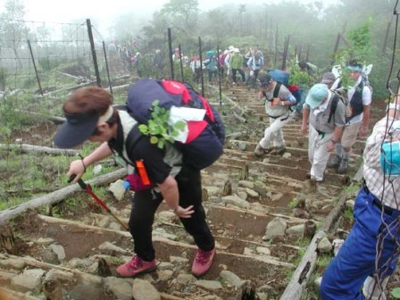 写真:苗木を担いで登るボランティアの皆さん