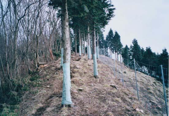 写真:植生保護柵と樹幹保護ネット