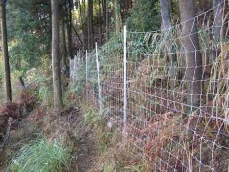 写真:集落と山を分けるように設置された広域獣害防止柵