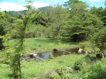 観察小屋から覗いた野鳥の森の池の写真