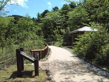 自然学習歩道の一部、森のあそび場の写真