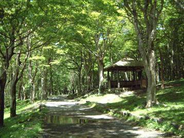 湖畔ふれあい園地の園路とあずまやの写真