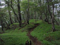 (写真2)ブナの続く登山道