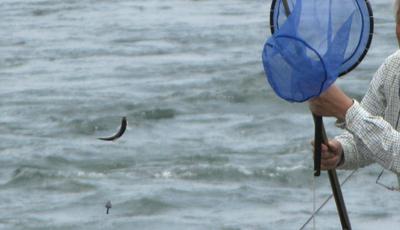 釣り どぶ