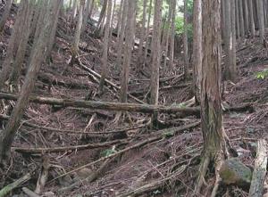 整備前森林