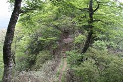 写真:大室山への登山道